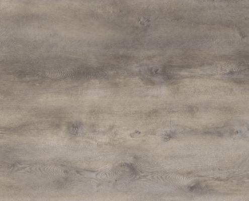 Colossal Shadow Oak